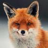 FoxOnTheBoxYT