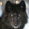 Nuttywolf3